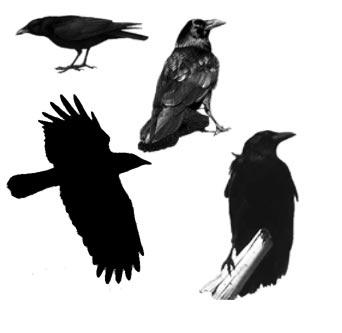 Photoshop brush with animal shapes