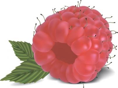 Berry design vector