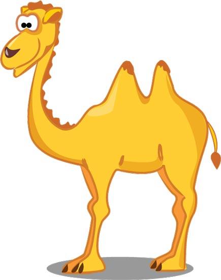 Верблюд картинка