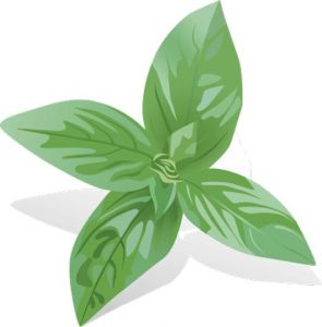Basil spice vector material