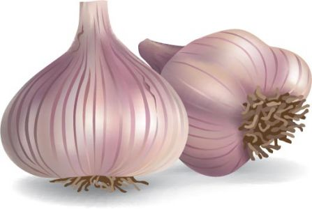 Garlic spice vector material