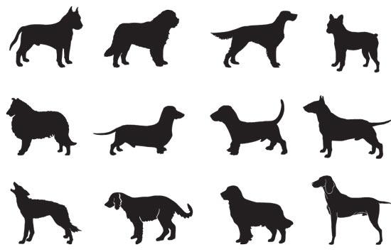 Black Dog Web Design