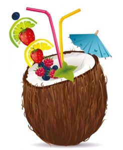 Coconut fruit high detailed vector