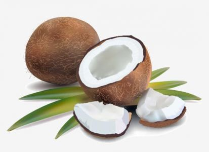Coconut and half fruit high detailed vector