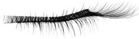 Eyelash photoshop template
