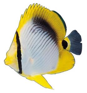 Fish model image