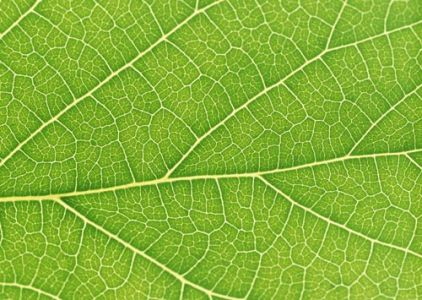Flat green leaves textures