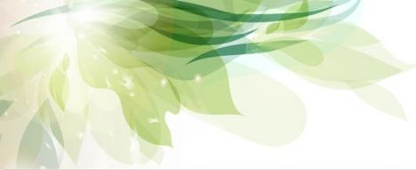 Floral banners with leaf shapes vector