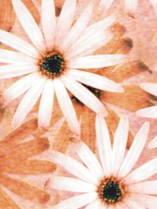 Flowers and leaves backgrounds