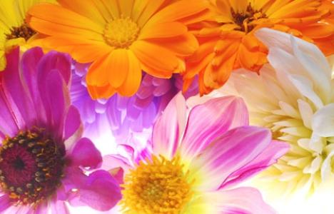 Flowers wallpaper design