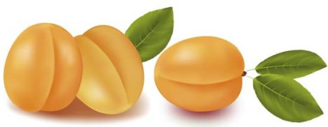 Fresh apricots vector design
