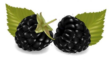 Fresh berries vector design