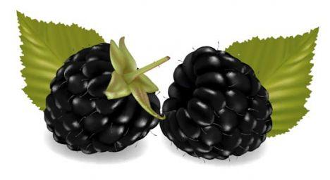 Fresh berries vector design