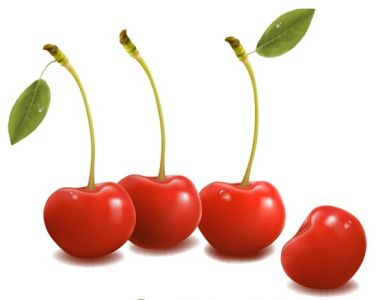 Fresh cherries vector design
