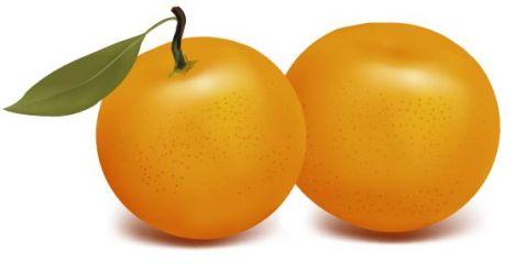 Fresh orange vector design