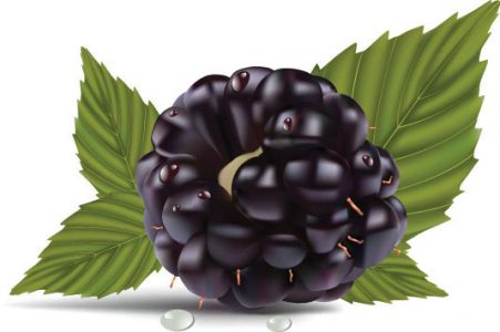 fruits-and-berries-vector1