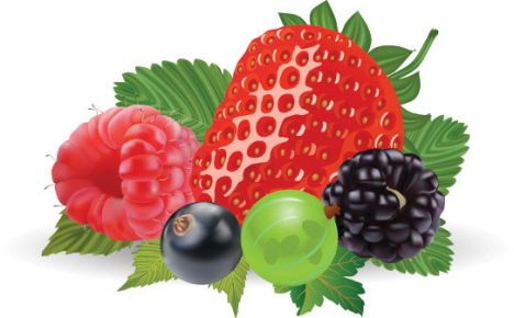 fruits-and-berries-vector3