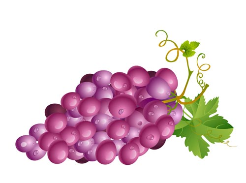 Grapes vectors with different colors and shapes