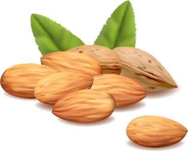 Green filbert nuts vectors