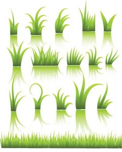 green-grass-vector-template2