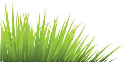 green-grass-vector-template3