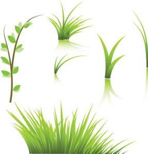 green-grass-vector-template4