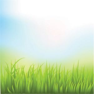 green-grass-vector-template5