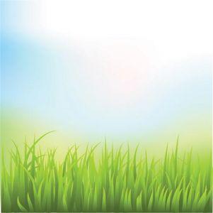 green-grass-vector-template5