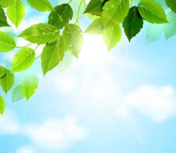 Green spring leaves with shinny sky