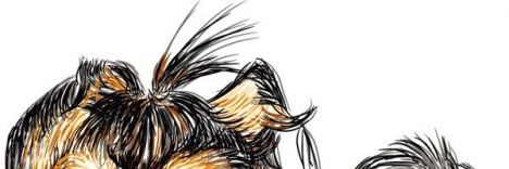 Hand drawn vector Shih Tzu