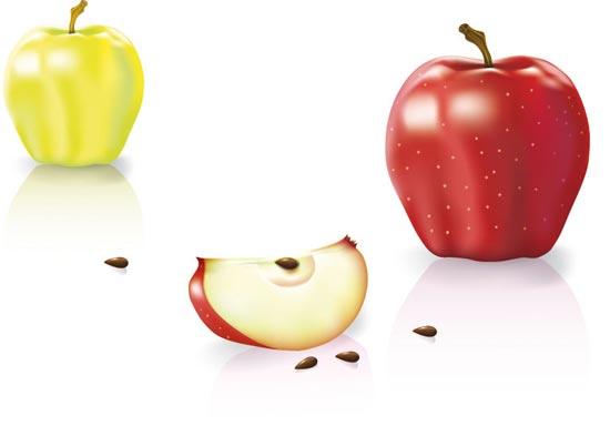 Realistic juicy fruit vector design