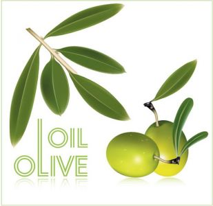 Olive oil vector labels