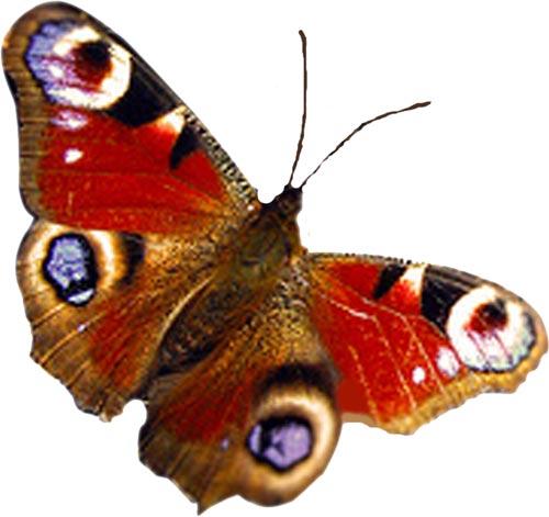 99 best Butterfly &- Woman art images on Pinterest | Woman art ...