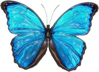 Photoshop butterfly model
