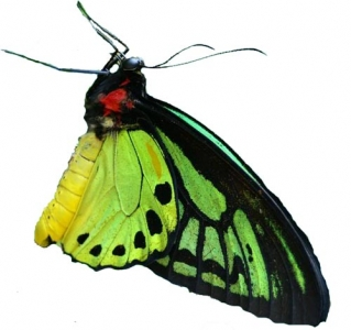 Photoshop butterfly design