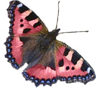 Photoshop butterfly model