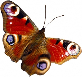 Photoshop butterfly layout