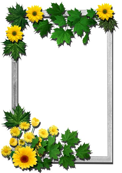 16 png flower frames for photoshop download 16 png flower frames for ...