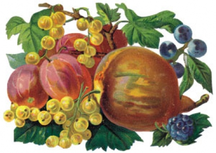 Png fruit clipart