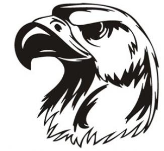 Predatory birds vector