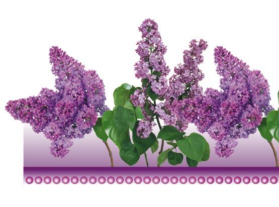 psd-floral-border-frame5.jpg