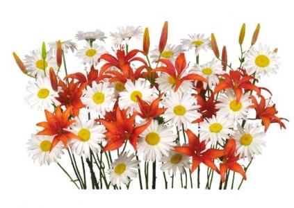 Psd floral border frame