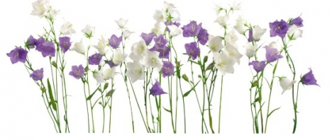 Photoshop floral border frame