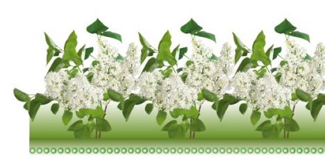 Photoshop floral border frame template