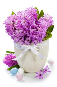 Purple hyacinths in creative basket