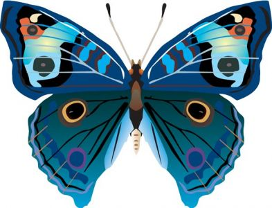 Realistic butterfly vector