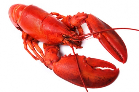 Seafood and lobsters image