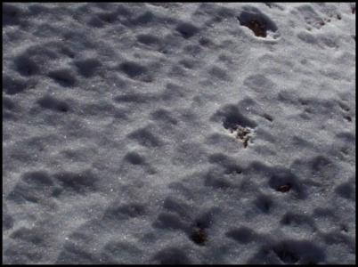 Snow texture design