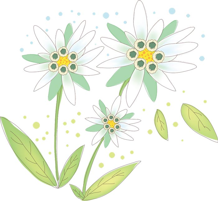 Vector Hand Drawn Sketches Of Spring Flowers