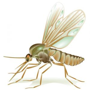 Vector insects template